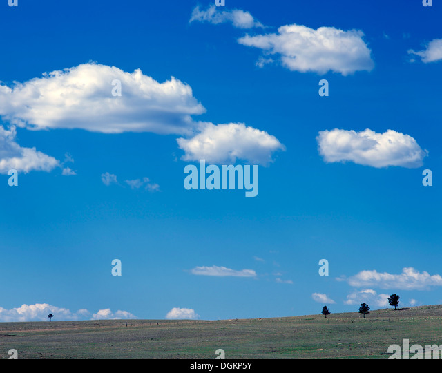 A view of isolated trees under an open sky in the San Isabel Forest. - Stock Image
