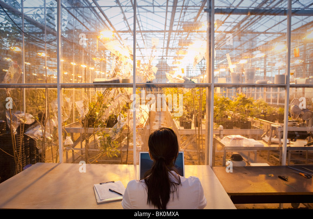 Indian scientist working in greenhouse laboratory - Stock Image