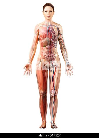 Image female anatomy