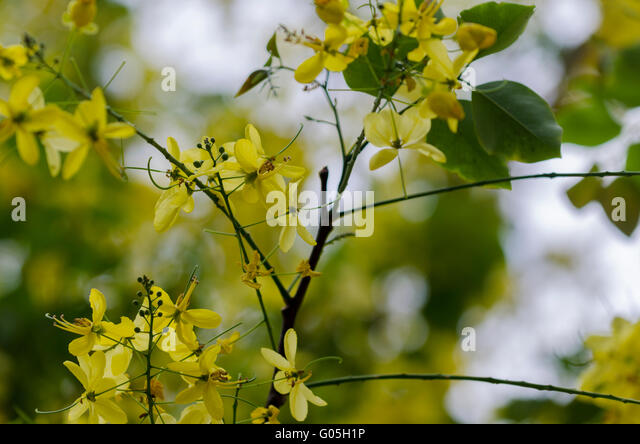 Names of herbs and plants in Tamil Hindi Chinese  Tamilcube
