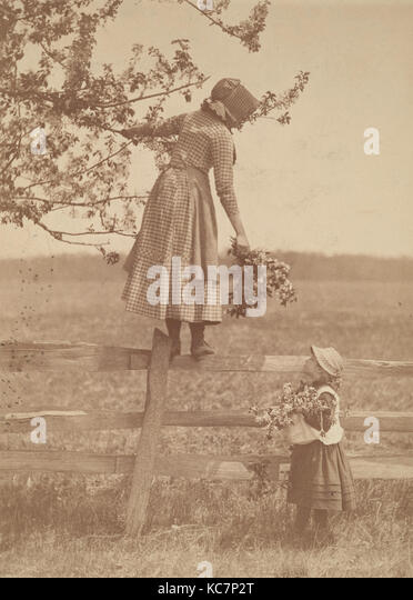 Apple Blossoms, 1890s–1900s, Albumen silver print, Photographs, Louis Comfort Tiffany (American, New York 1848–1933 - Stock Image