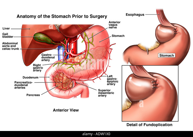 Surgical anatomy of pancreas