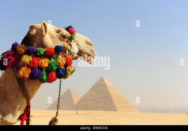 egypt-giza-the-great-pyramids-camels-b9w