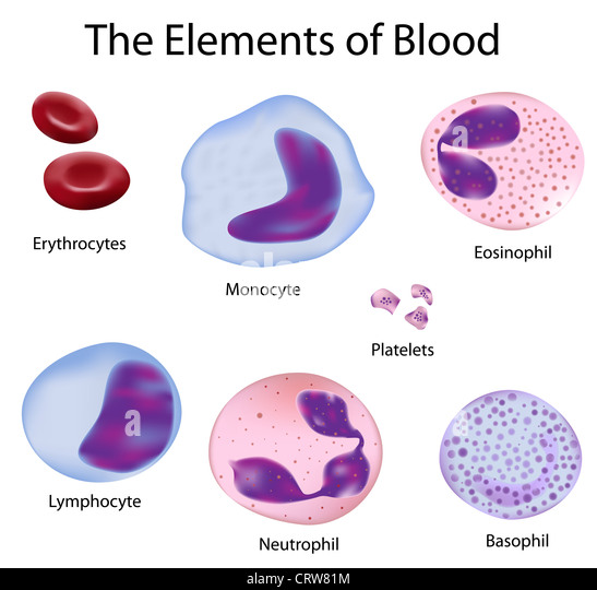 leukocytes and erythrocytes comparison What is blood blood plays many plasma is the liquid portion of blood it's what suspends red blood cells, platelets, and other cells within our bloodstream.