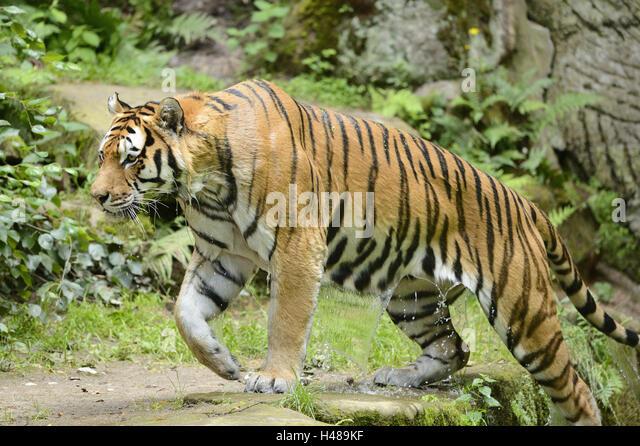 Grizzly Bear vs Siberian Tiger Fight Comparison