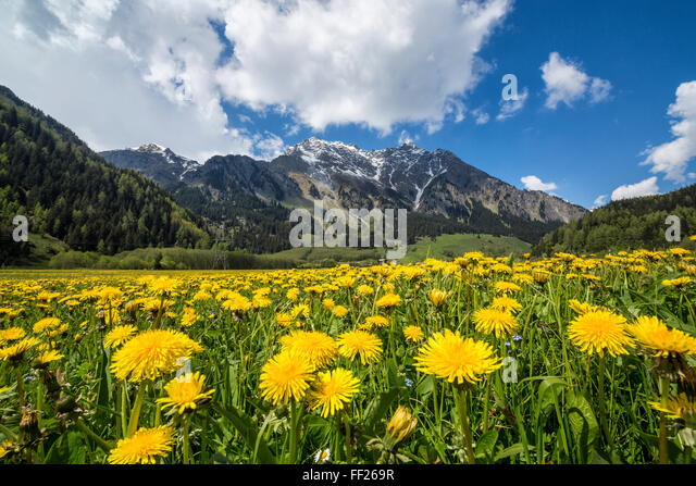 spring-flowers-and-green-meadows-casacci